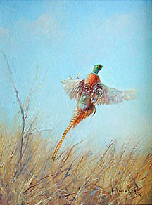 [painting of pheasant]